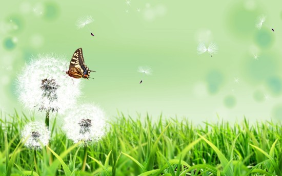 butterfly_nature-1280x800