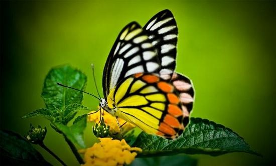 Butterfly (550x331)